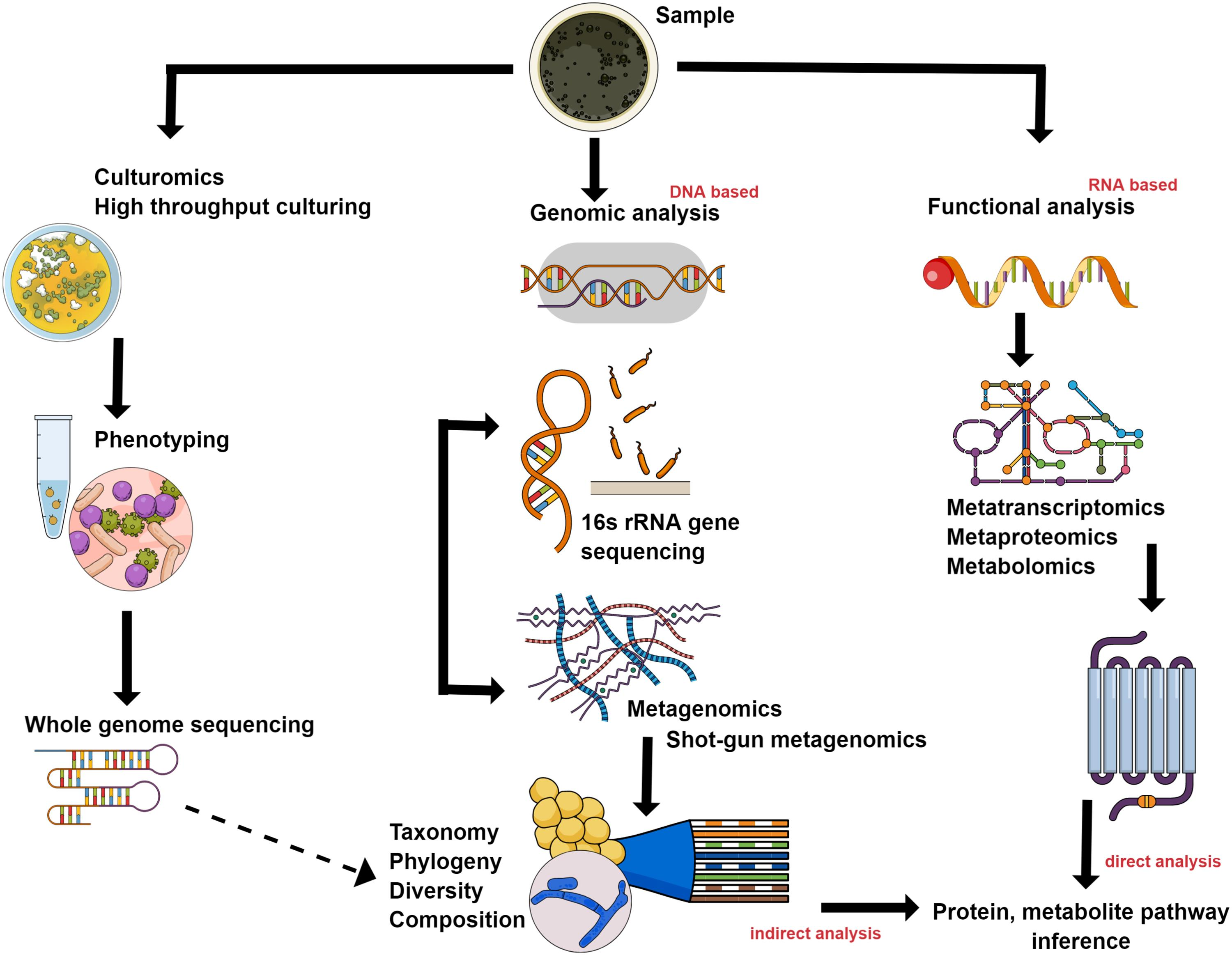 Various methods for identifying and studying the gut microbiota and microbiome.