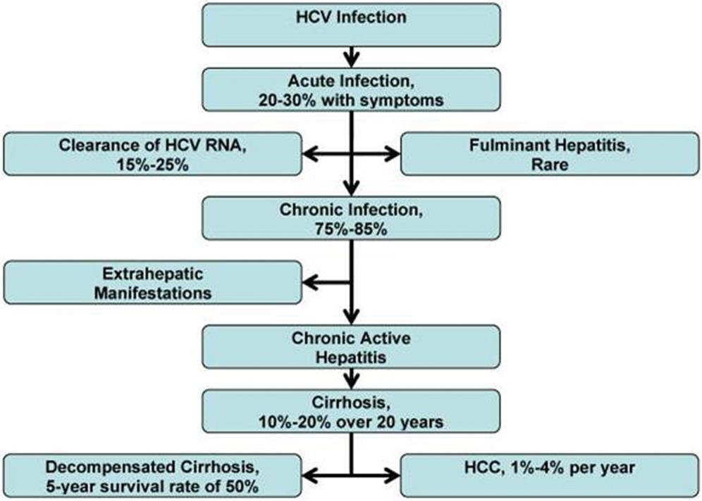 Natural history of hepatitis C (HCV) infection.