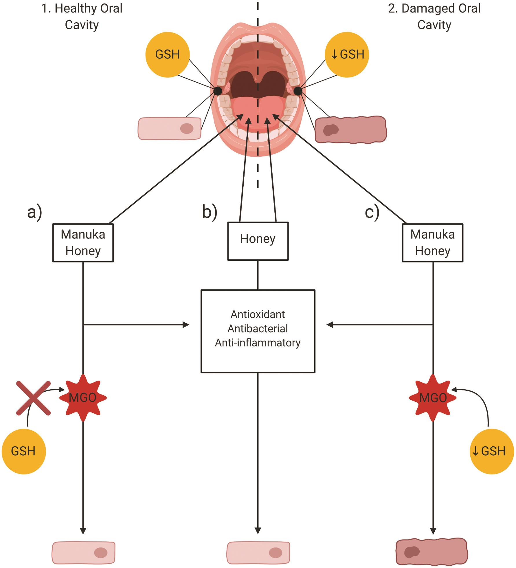 Effect of honey on the oral cavity.