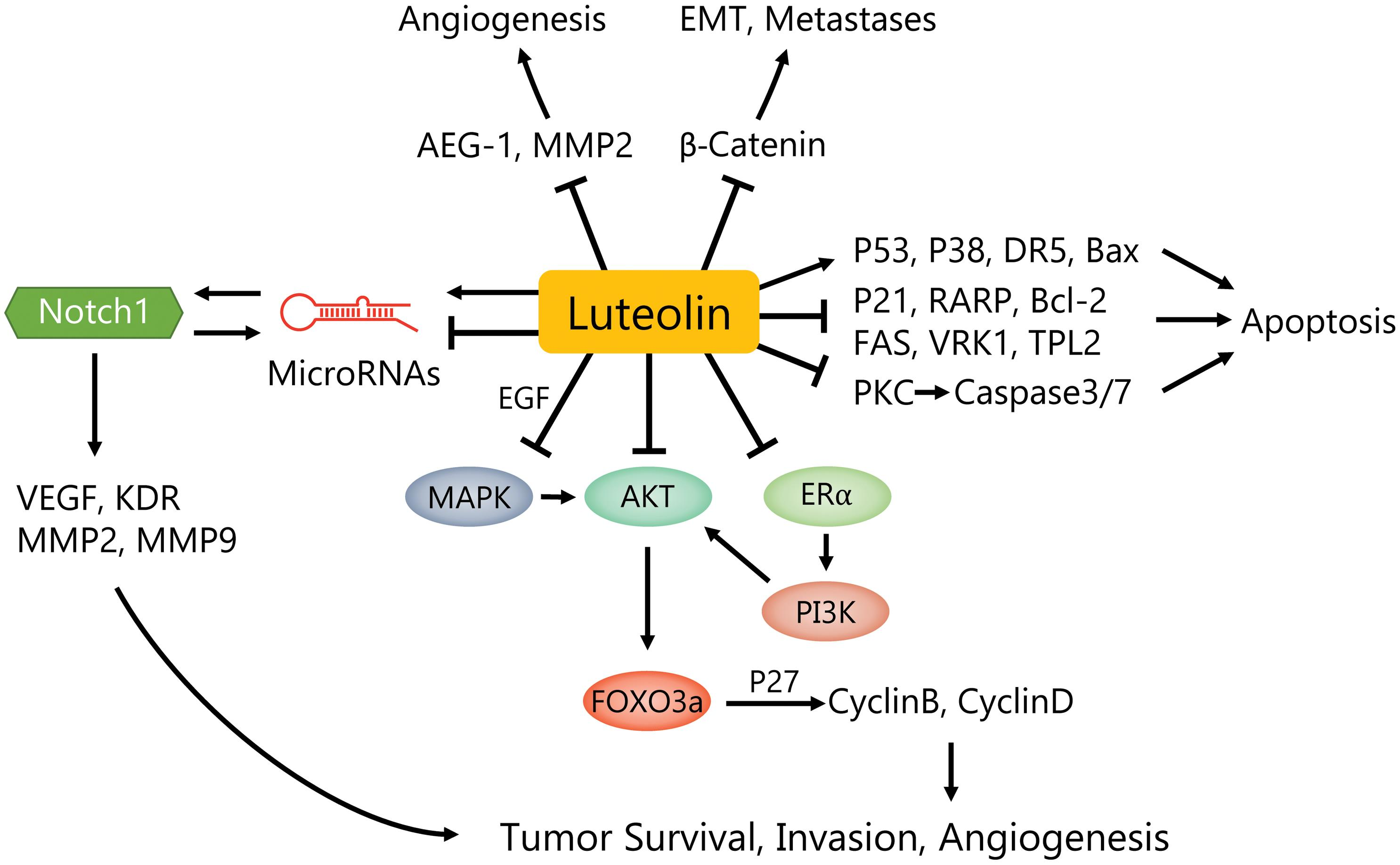 Luteolin: Anti-breast Cancer Effects and Mechanisms