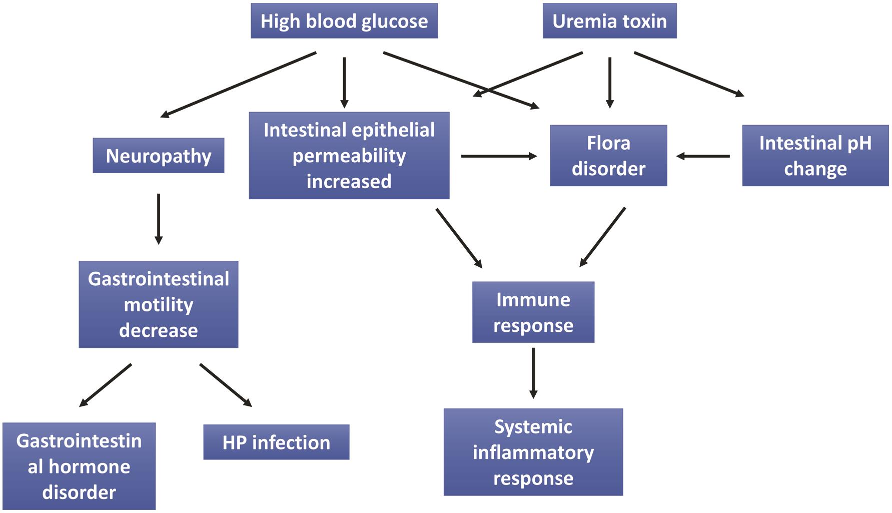 The main mechanism of diabetic nephropathy effect on the digestive system.