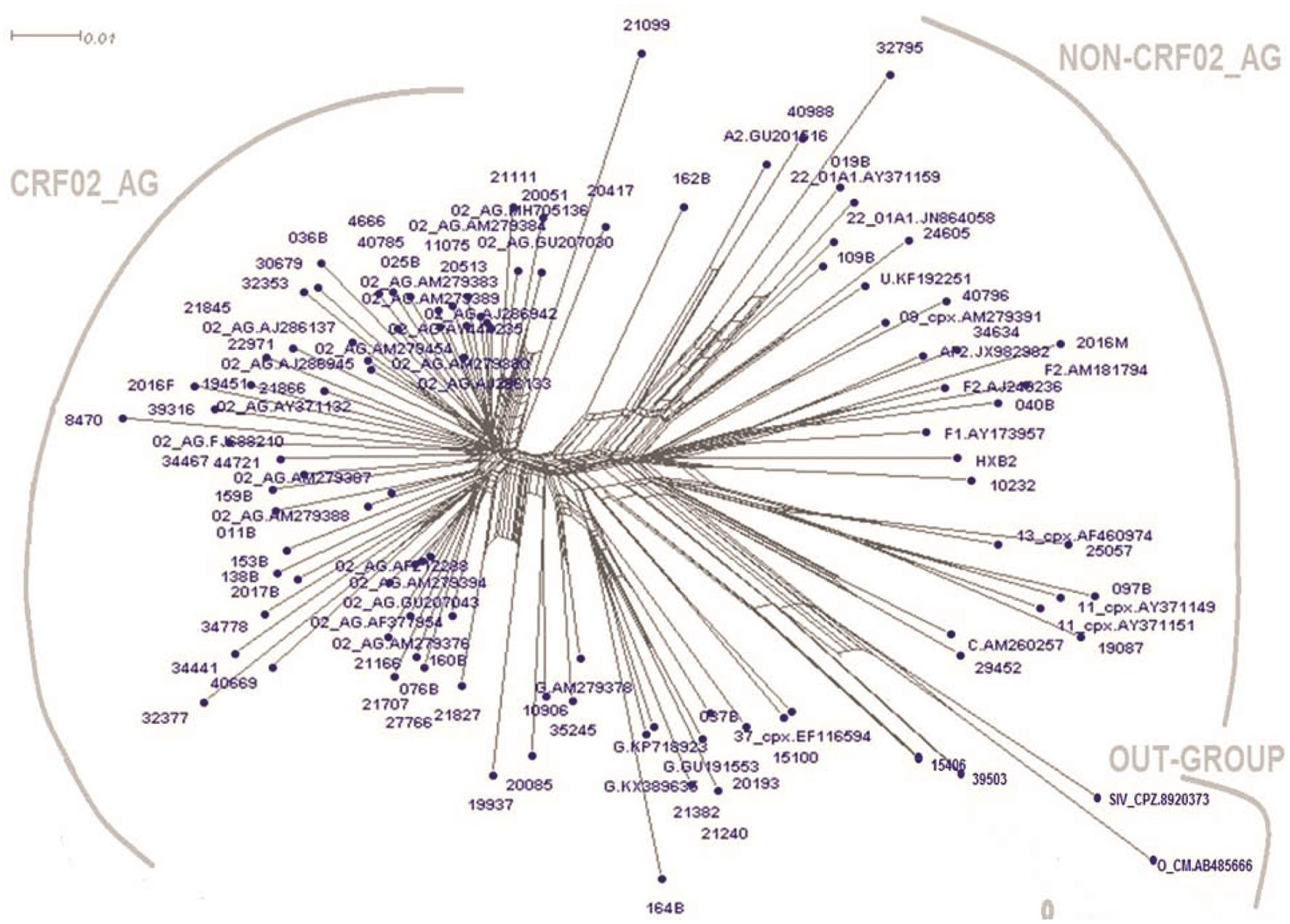 HIV-1 phylogenetic tree of the 63 perinatally infected participants.
