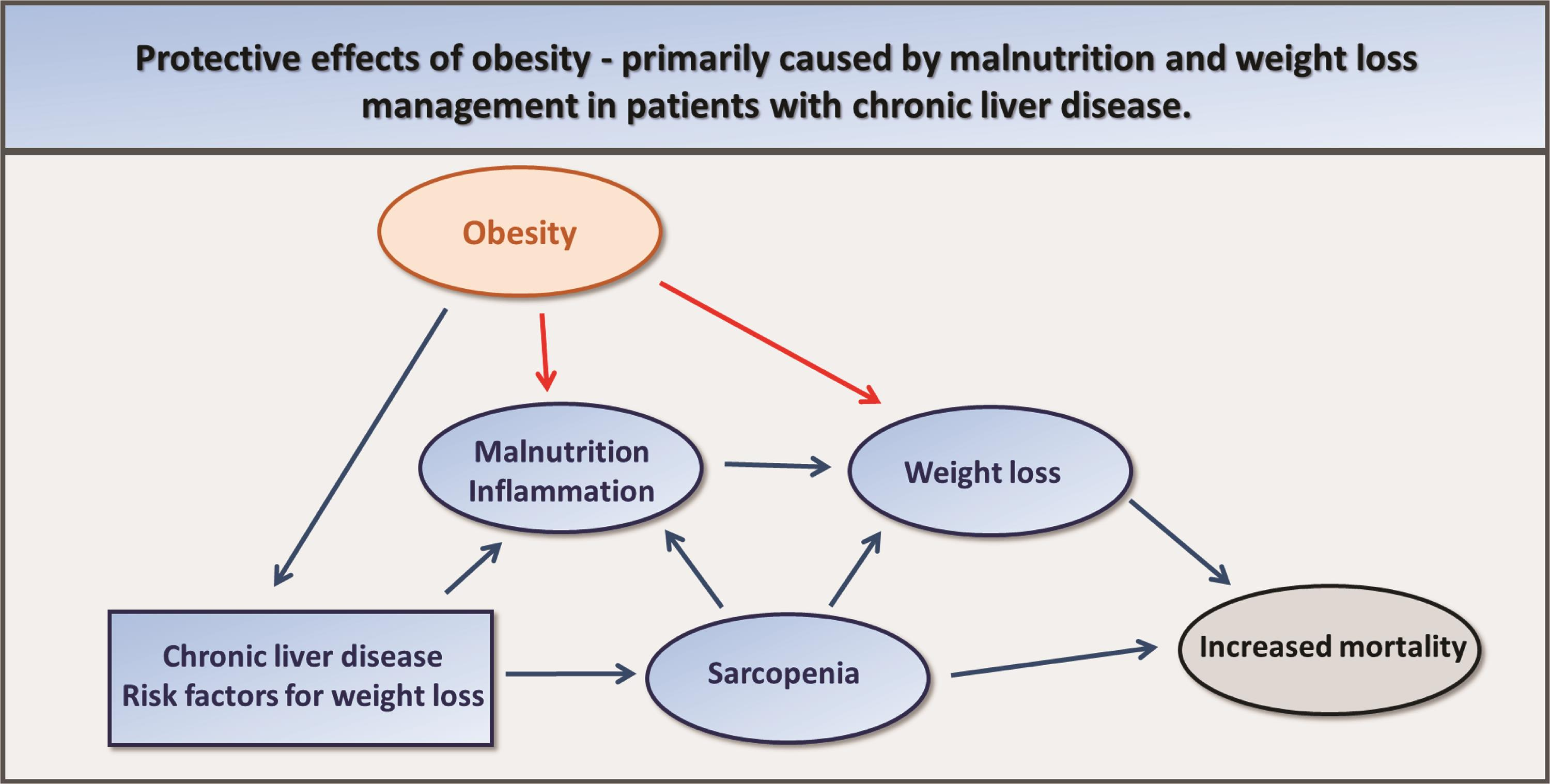 Schematic presentation of obesity as a risk factor for chronic liver diseases, such as NASH and NAFLD.