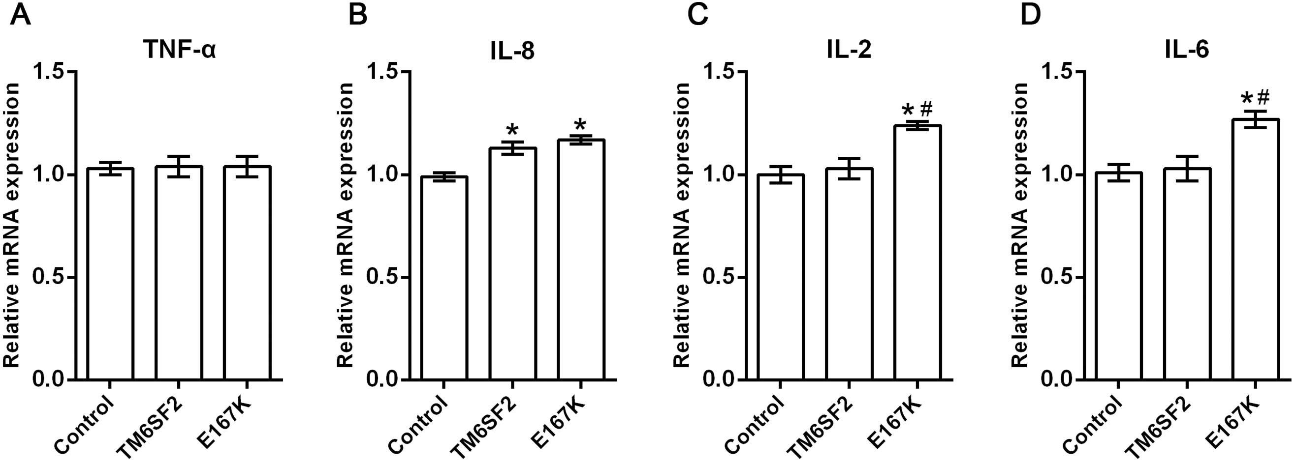 Relative expression levels of TNF-α, IL-2, IL-6 and IL-8 in HEPA 1-6 cells for the TM6SF2 overexpressed group, TM6SF2 E167K overexpressed group, and negative control group.