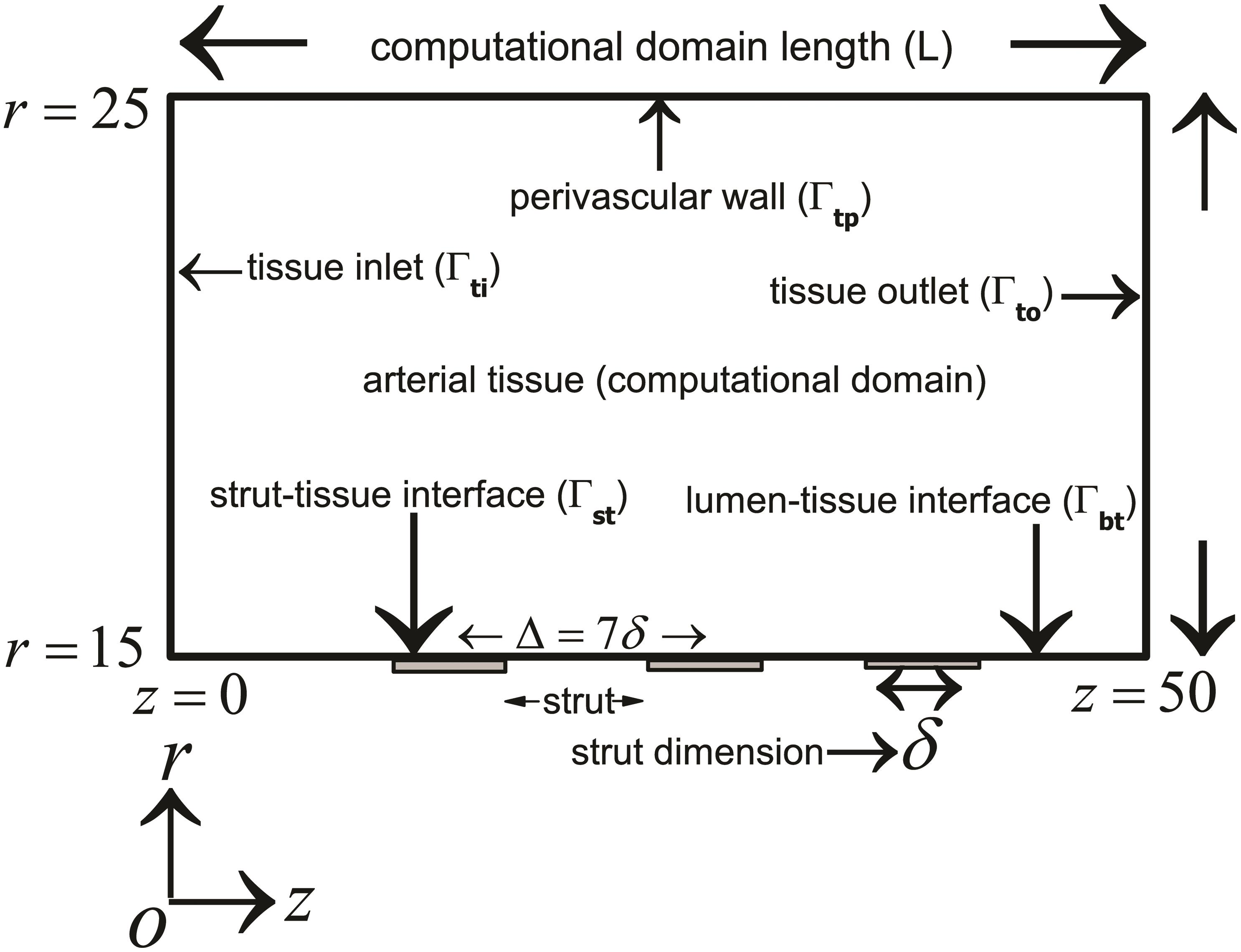 Schematic of the computational model used for the study.