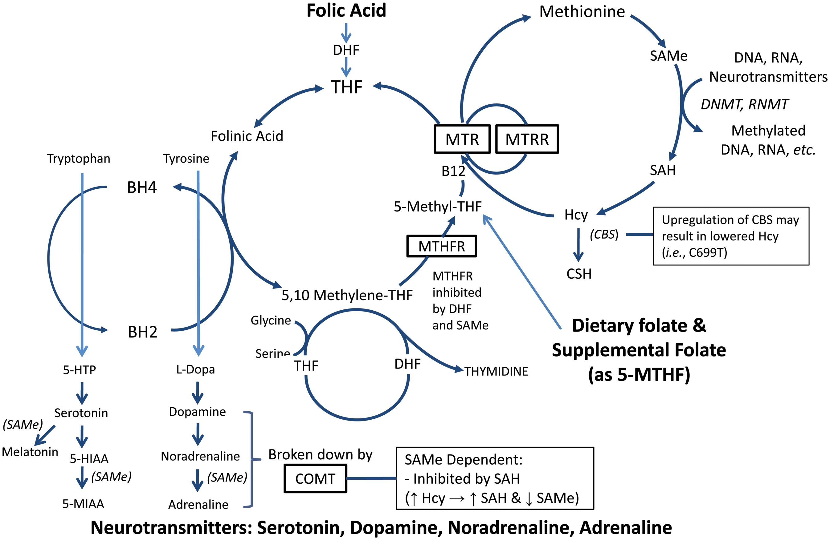 Effect of Folate Supplementation on Inflammatory Markers in