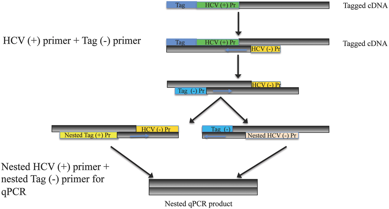 Nested qPCR for quantitation of tagged HCV cDNA.
